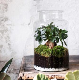 « Terrarium » par Julie Martin, Designer végétal