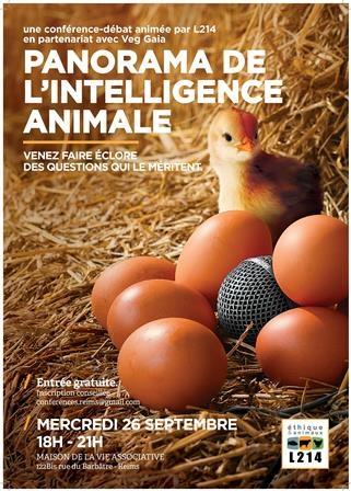 Panorama de l'intelligence animale