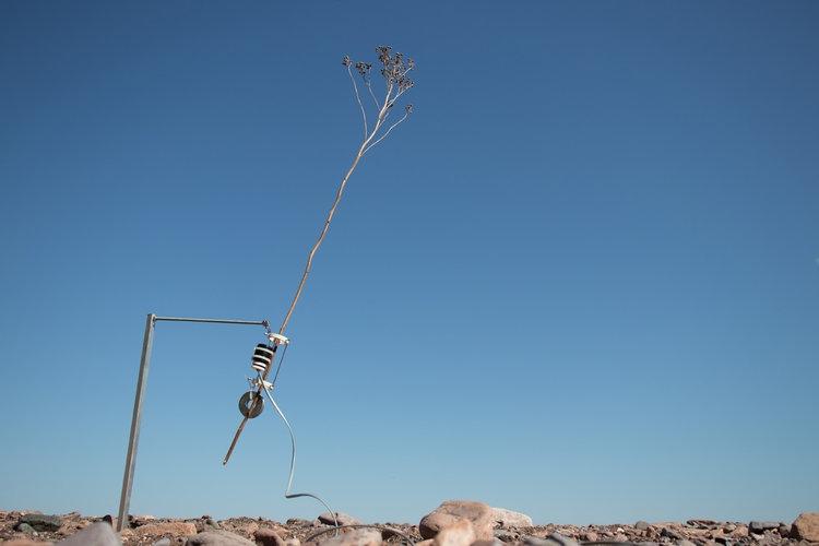 """""""Tele-present wind"""" de David BOWEN"""