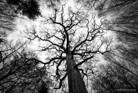 Nos amis enracinés, Faux de Verzy et autres arbres remarquables de nos régions