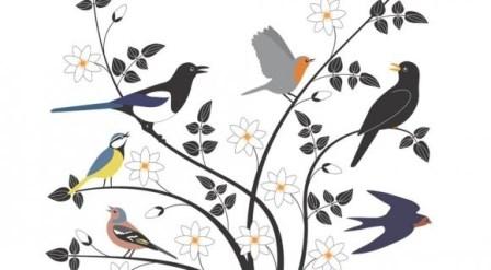 Les oiseaux (Emilie Vast)