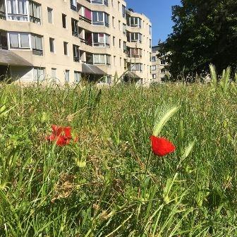 Balade botanique (2 séances)